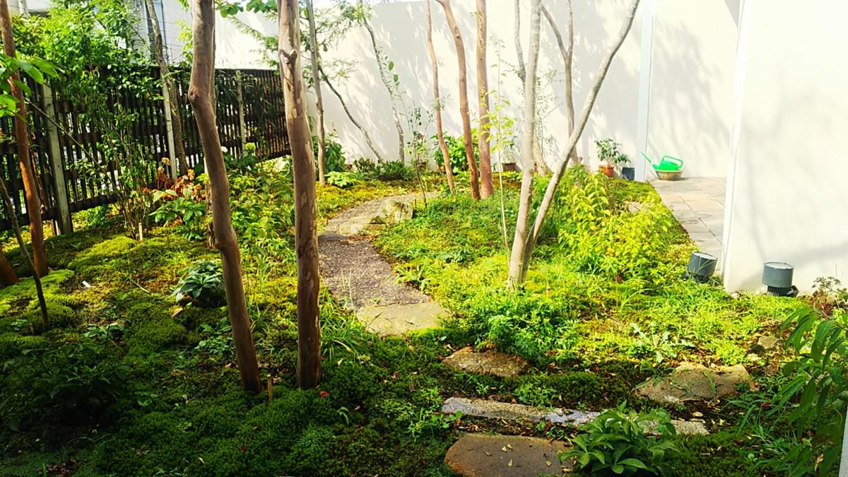 庭のお手入れ・除草対策・樹木伐採・害虫駆除他