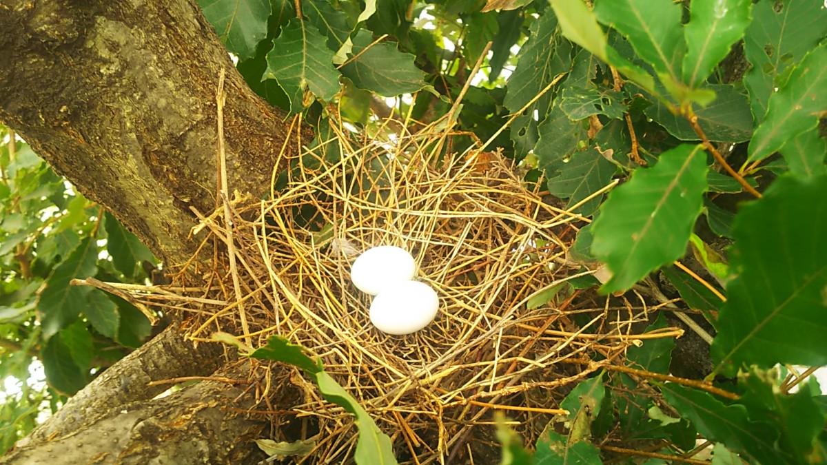 撤去 ツバメ の 巣